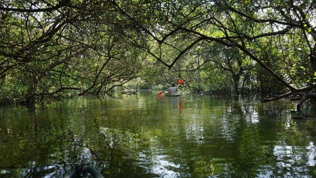 Konkan Explorers offers tours of Goa's beautiful mangrove forests.