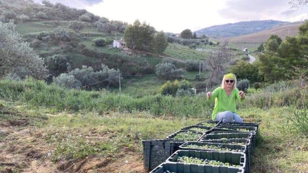 Alexandra Stubbs helping with the olive harvest on Sarah Wolferstan's farm.