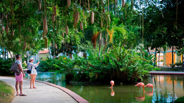 Tourists take pictures of flamingoes in Bayahibe, La Altagracia province.