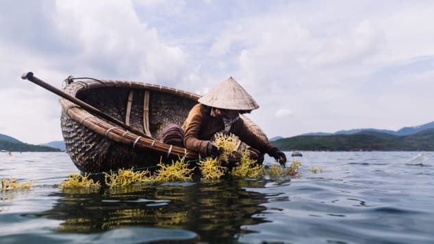 Vietnam's basket boats can be spotted in the waters around Hoi An and nearby Da Nang.