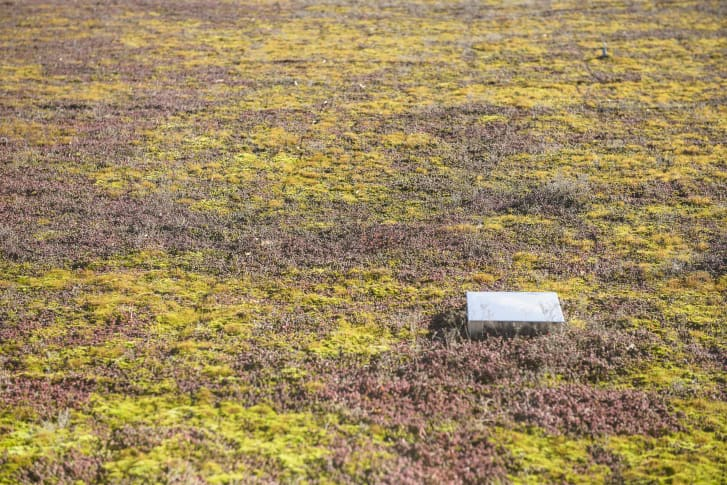 A green roof helps to protect the dwindling bee population.