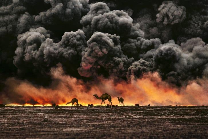 Camels and Oil Fields. Al Ahmadi, Kuwait, 1991.