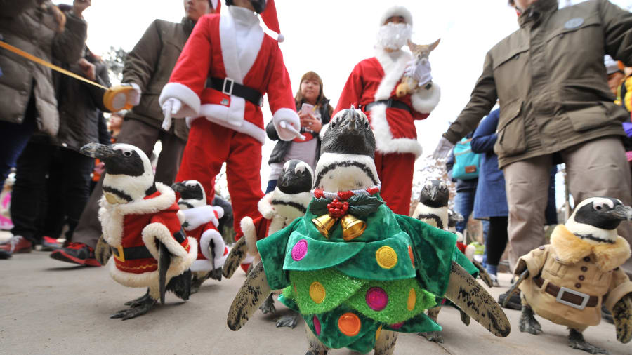 south korea christmas penguin march cnn travel