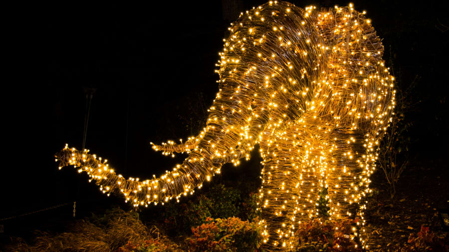 8 best usa christmas lights washington dc