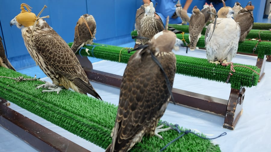 falcon-triage