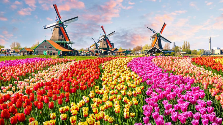 06 happiest countries Netherlands