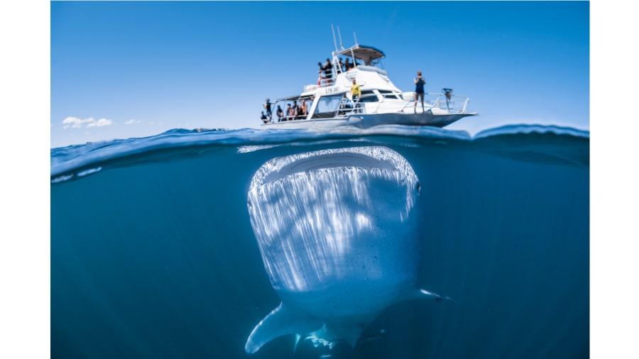 Australia Tourism Instagram Whale Shark