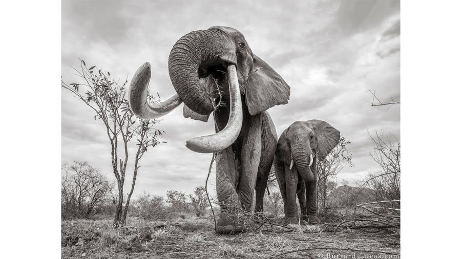elephant-4