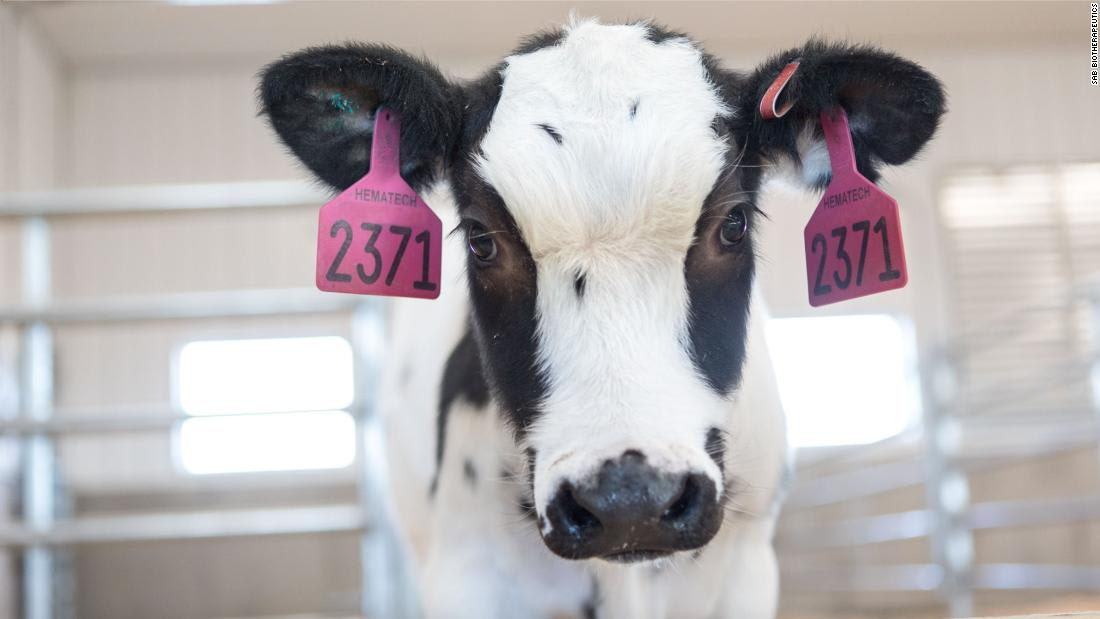 Human trials expected to start next month for Covid-19 treatment derived from cows' blood