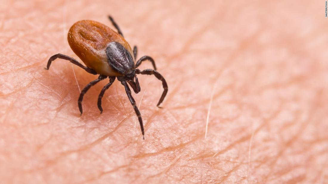 Why tick season could be worse in the summer of Covid-19