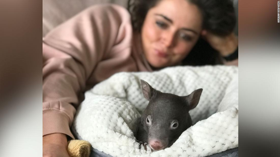 Wombats, snails, ferrets: The animals that brought us joy during the pandemic