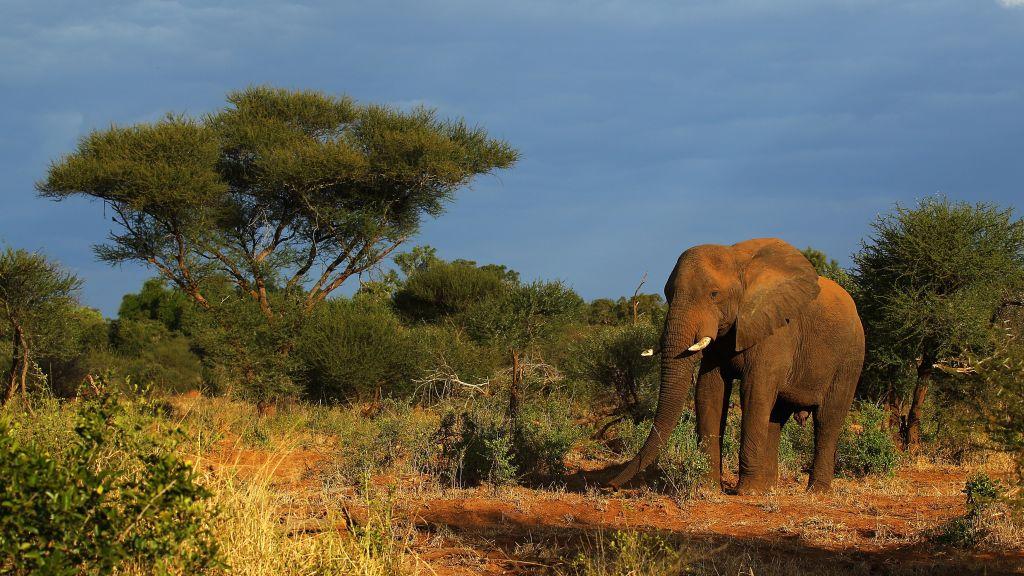 African Safari Best National Parks To View Wildlife CNN Travel - 10 best safaris in africa