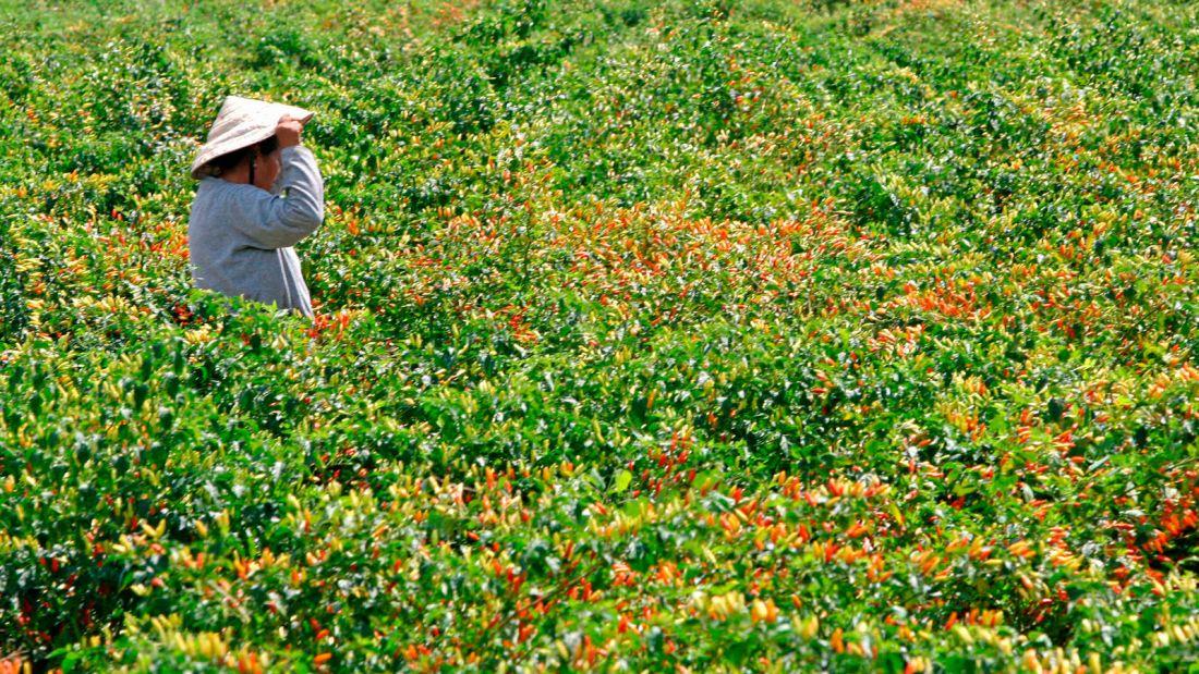 Tabasco-island---McIlhenny-Company-plantation---Getty-images