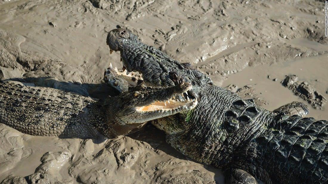 Australia Kakadu Spectacular Jumping Crocodile Cruise, Adelaide River 121350-3