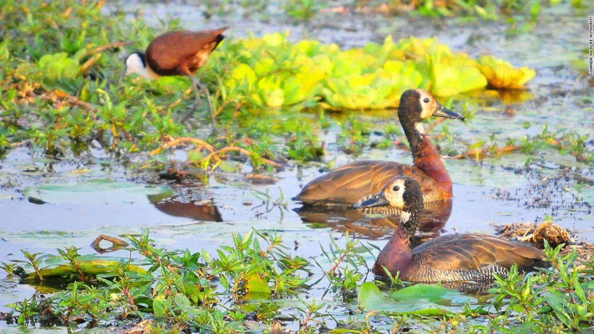 Kidepo National Park: Uganda's top destination