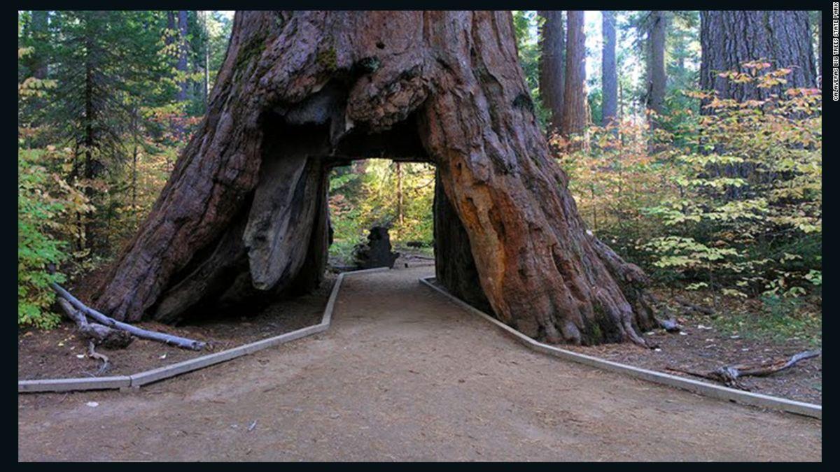One of californias famous drive through trees toppled by winter one of californias famous drive through trees toppled by winter storm cnn travel arubaitofo Gallery