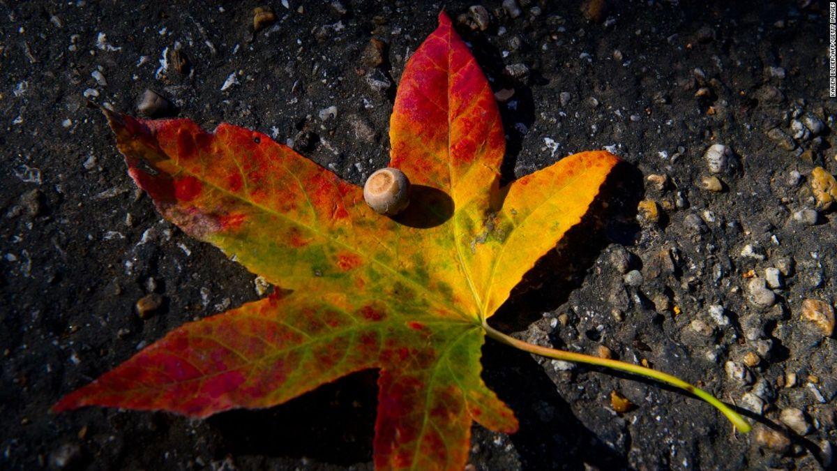 叶子为什么变色?
