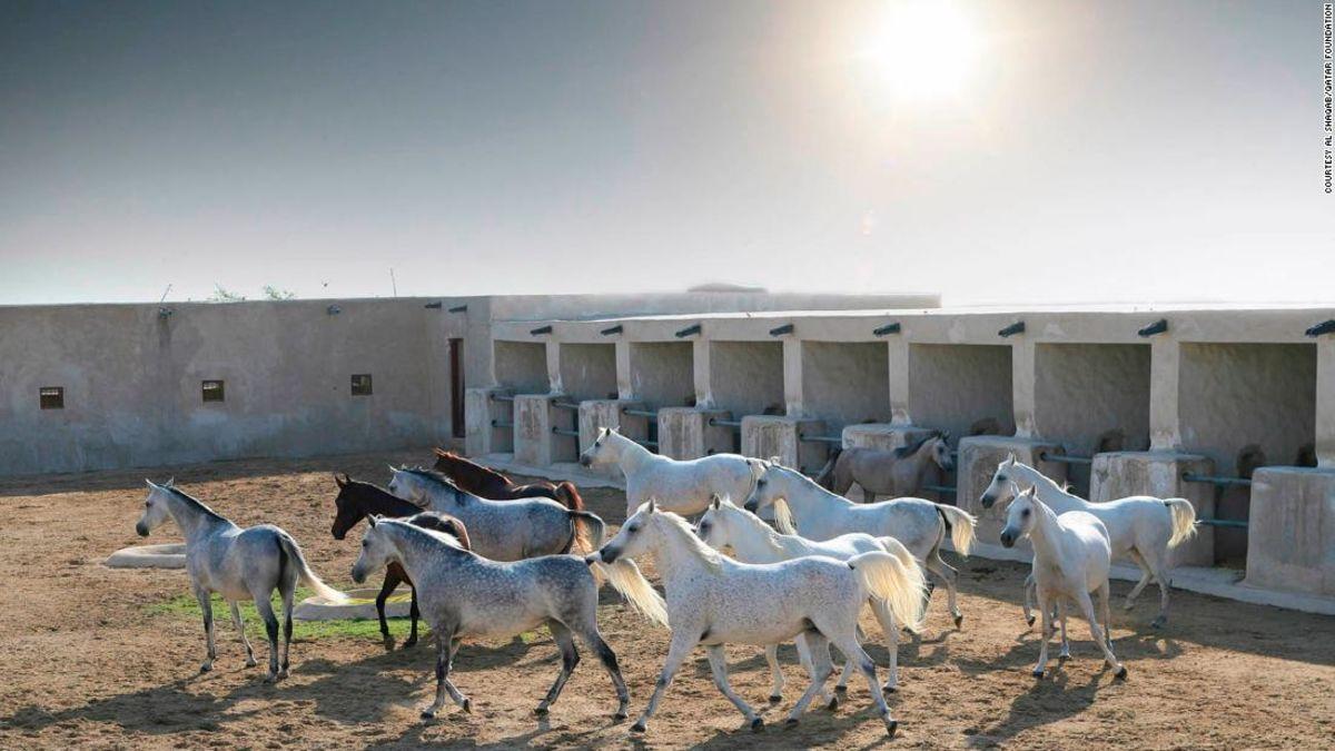 A five-star resort for horses: Qatar's Al Shaqab equestrian center