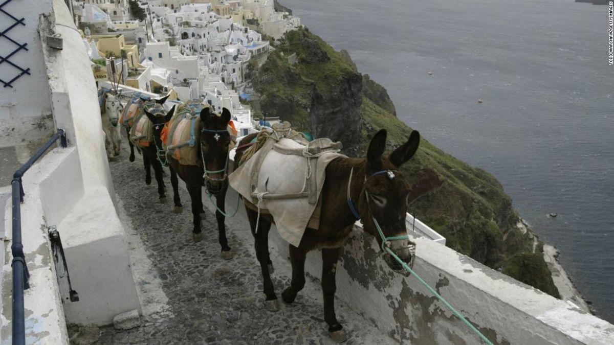 Greece bans 'heavy' tourists using donkeys