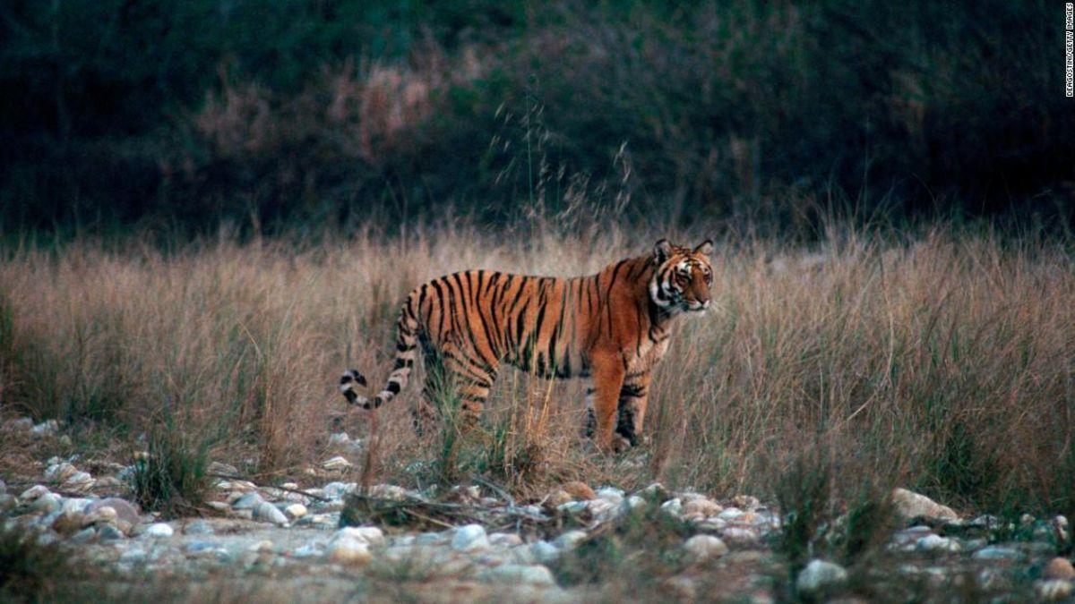 A wildlife filmmaker's guide to India's Jim Corbett National Park