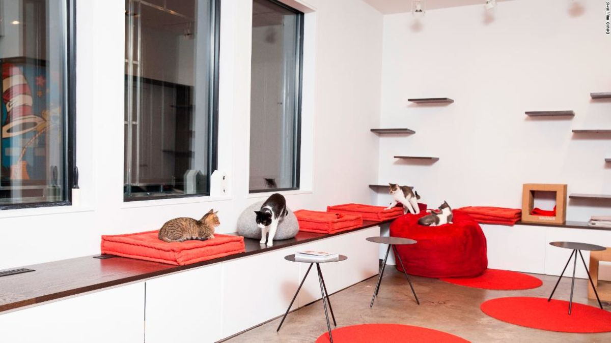 Forget about 'Cats' and check out one of these cat cafes instead