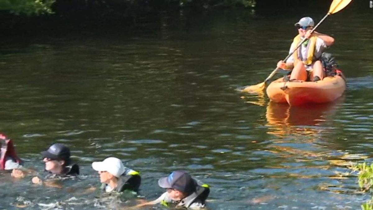 Rescuers used a human chain to save a group of dolphins stranded in a Florida canal