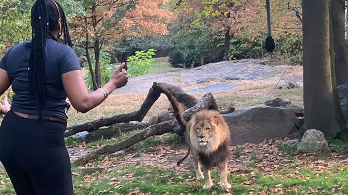 Zoo says a woman seen dancing inside its lion enclosure is lucky to be alive