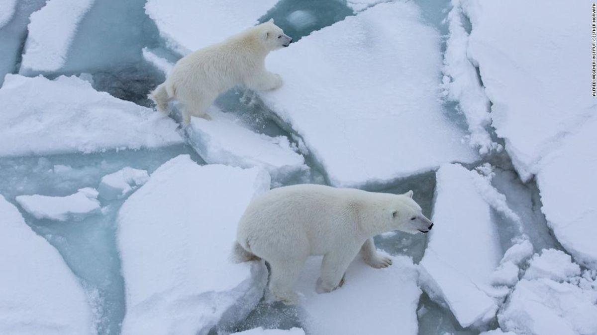 Dokumentation der rasche Verlust des arktischen Meereises