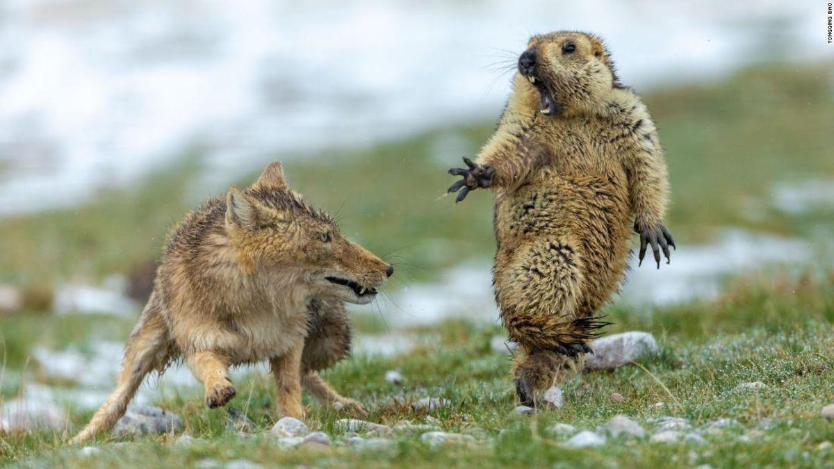 Wildlife Photographer of the Year winners showcase stunning scenes from nature