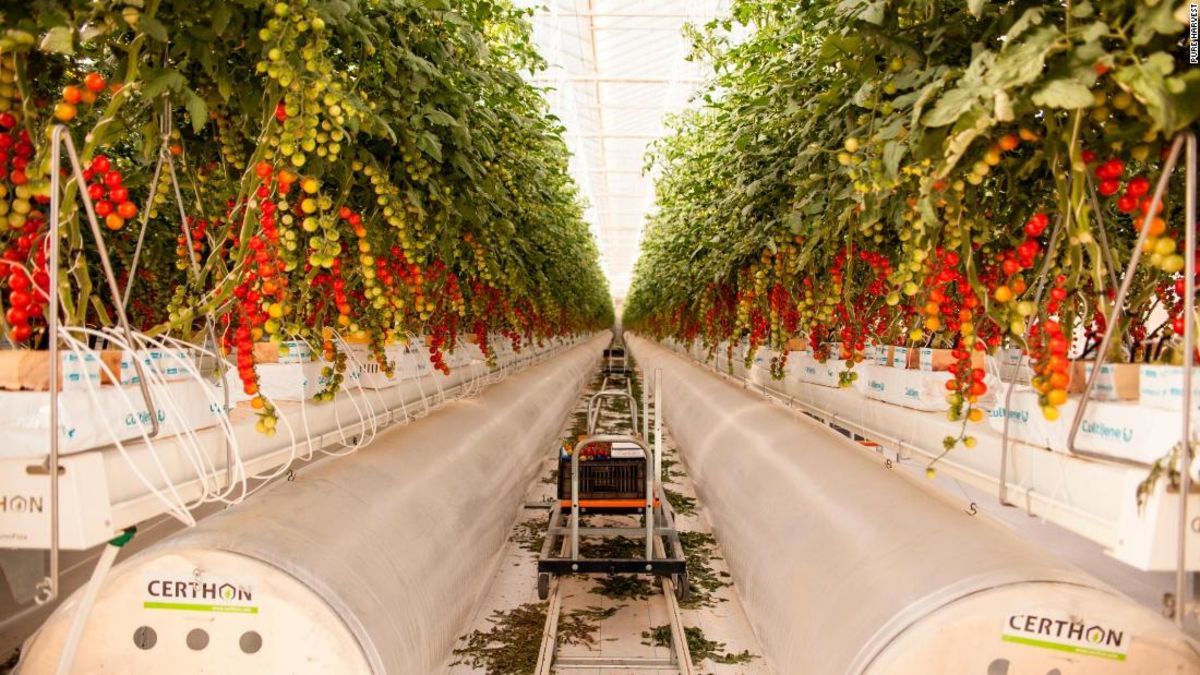 Can desert greenhouses resolve food security time bomb?