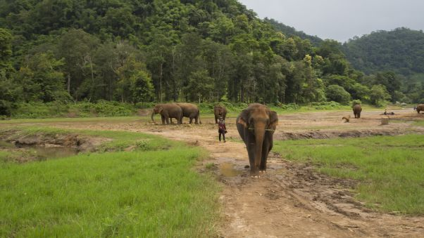 """""""I think it's very important to come here and care for elephants, rather than use the animals for entertainment,"""" says park founder Sangdeaun. Image: CineBeau/CNN"""