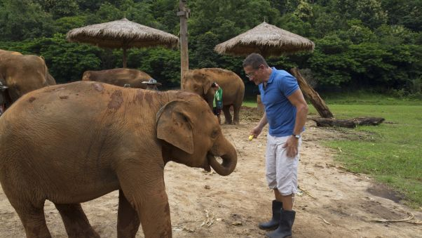 the elephants aren't shy when it's time for a snack. Image: Cinebeau.com/CNN