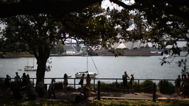 The trees keep Sydney-dwellers cool in hot weather.