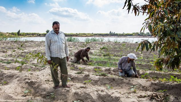 Today, farmers are struggling to grow crops in the Nile River Delta's once-fertile soils.