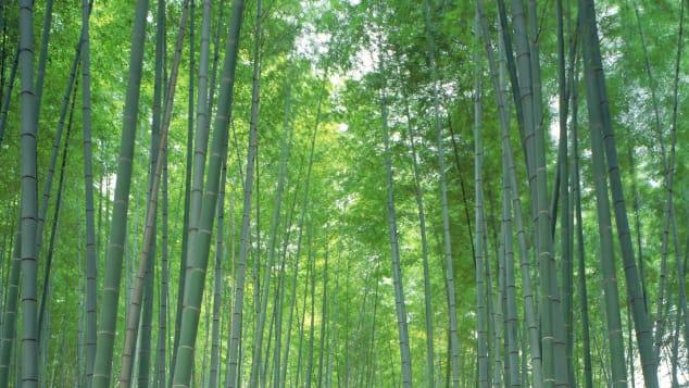 beauitful japan Sagano