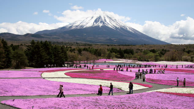 đẹp Nhật Bản Fuji Shibazakura lễ hội Yamanashi