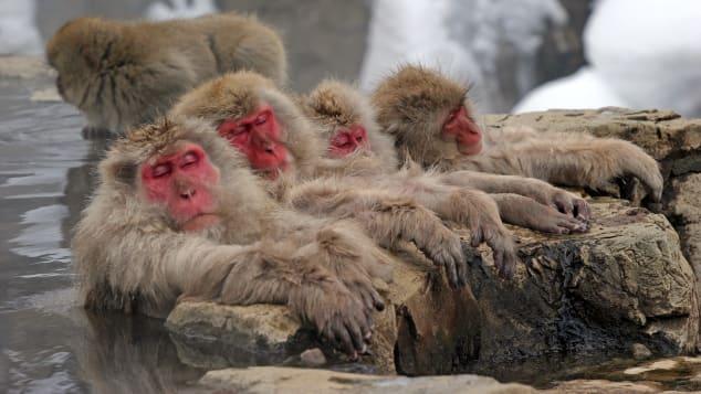 đẹp Nhật Bản Snow Monkey Park
