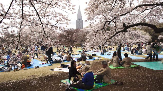 Vườn Quốc gia Shinjuku Gyoen ở Tokyo là nơi hoàn hảo để thư giãn dưới hoa anh đào.