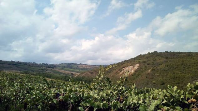 Cantina Cerretano vineyard - Abruzzo