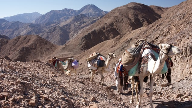 Camels carry gear up a rocky pass.