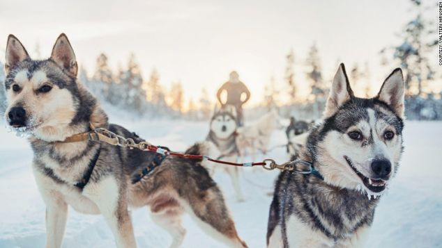 Fancy a husky ride? This is the place for you.