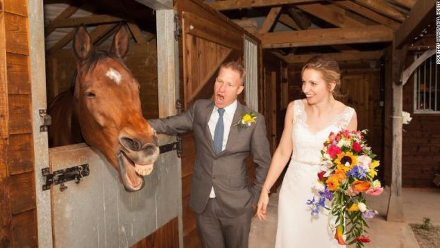 Friendly horse Jack is a welcome wedding guest at Manor Hill.