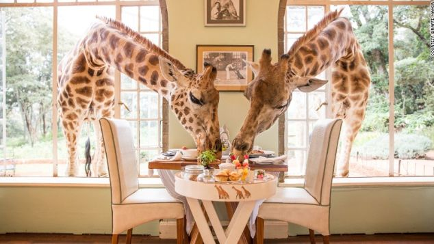 Share your breakfast with giraffes at Giraffe Manor