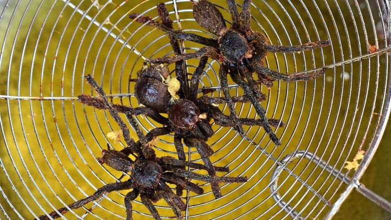 Learning to cook Tarantulas in Siem Reap, Cambodia