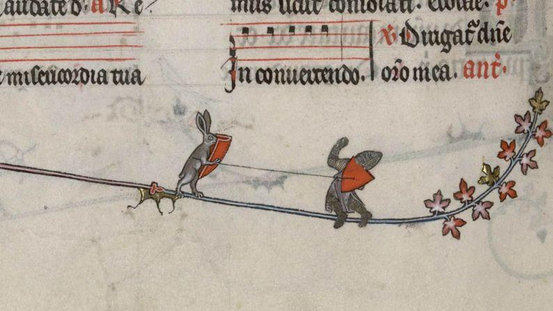 rabbit v knight